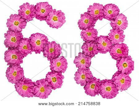 Arabic Numeral 68, Sixty Eight, From Flowers Of Chrysanthemum, Isolated On White Background