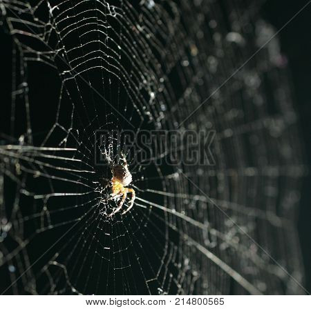 Spider in a center of spider web