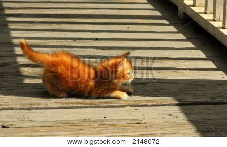 Orange Tabby Baby Kitten On The Bridge