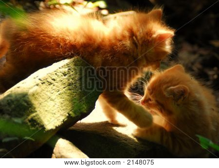 Sunlit Glow Kittens