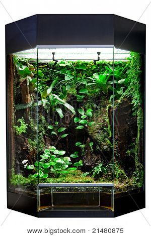 terrarium or vivarium for keeping rainforest animal such as poison frog and lizards. Glass habitat pet tank with green moss and jungle vegetation. Tropical animal cage.