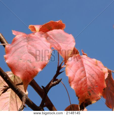 Group of leaves painted from autumn in traditional red colour. poster