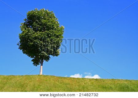 Lone Tree Against Blue Sky