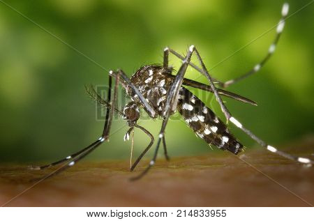 Mosquito of malaria is sitting on hand