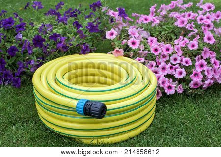 Yellow hose pipe in a garden with flowers