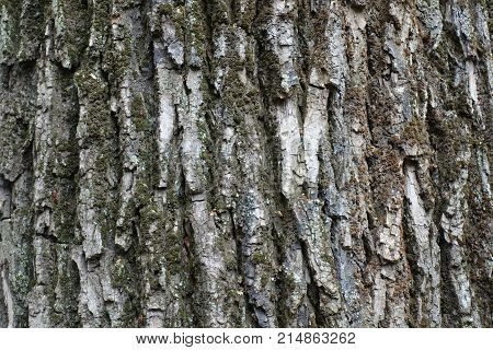 Rough And Deeply Fissured Bark Of A Tree