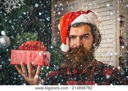 Santa Claus Man With Present Box At Christmas Tree
