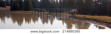 Herd Of Wild Horses At Watering Hole In The Pryor Mountains Wild Horse Range In The States Of Wyomin