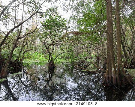 Natural Landscape Corkscrew Swamp Sanctuary Audubon Naples Florida