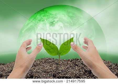 Hand of man growing and nurturing tree growing on fertile soil with nature world background care environment concept Elements of this image furnished by NASA.