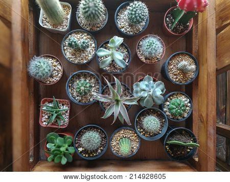 cactusin a pot cactusin a pot cactusin a pot