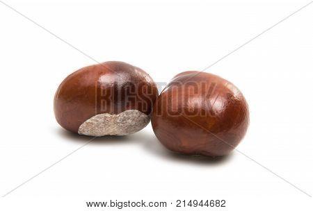 chestnut macro detail isolated on white background
