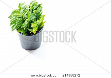 Fresh Condition With Small Tree On Background