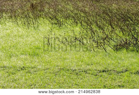 The empty space in green grass background