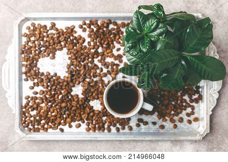 Coffee Plant Tree, Espresso And Roasted Coffee Beans. Top View