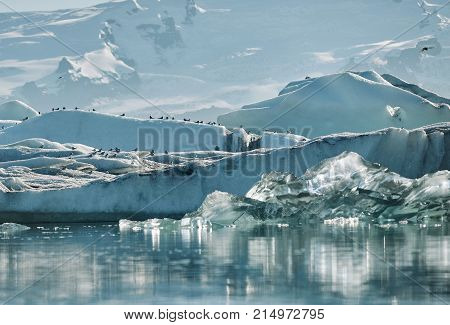 Beautiful vibrant picture of icelandic glacier and glacier lagoon with water and ice in cold blue tones, Iceland, Glacier Bay, birds on icebergs in the water, focus on the birds.