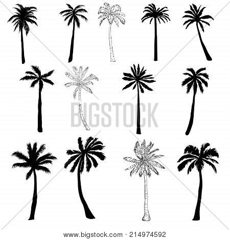 Vector palm tree silhouette icons on white background, branch, climate, environment, exotic, flora, floral, hawaii, icon, illustration island leaf nature outdoor paradise plant