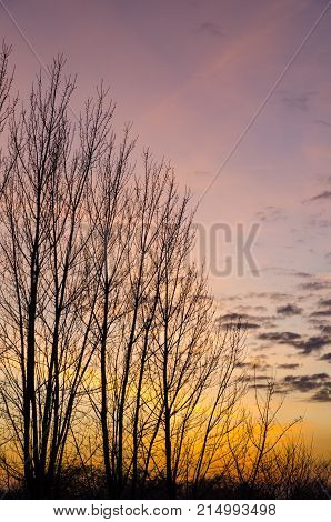 Barren trees on the autumn evening with yellow and orange sunset on a clear sky with picturesque scattered clouds
