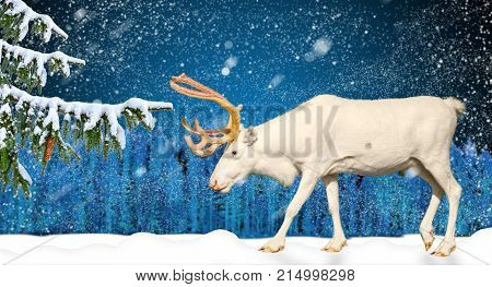 Winter holiday scene in snowing forest and deer, change of year, new year 2018, christmas