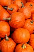 Pumpkins for Sale are Piled up at a Market. poster