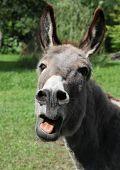 donkey shouting poster