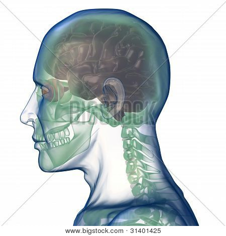 head x_ray right view