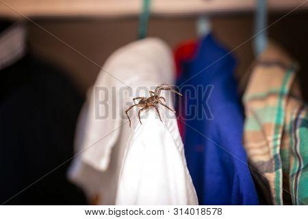 Arachnophobia, Poisonous Spider Inside Wardrobe, Danger, Venomous Animal. Fear Concept.
