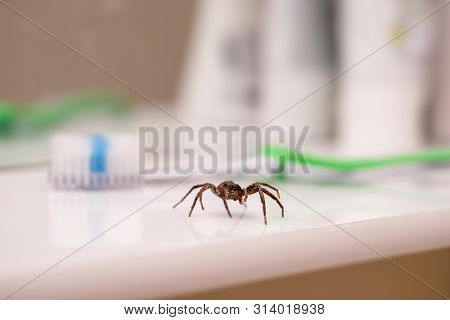 Poisonous Spider Inside Residential Toilet. Arachnophobia Concept, Fear Of Spider. Spider Bite Or Fi