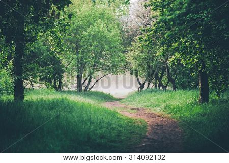 Atmospheric Landscape With Beautiful Lush Green Foliage. Footpath Under Trees In Park In Early Morni