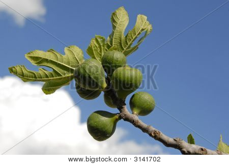 Fig Fruits And Leaf