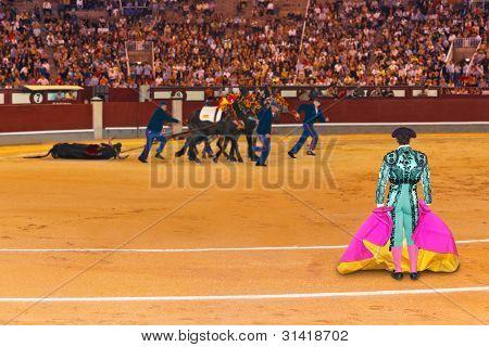 Matador And Dead Bull In Bullfighting At Madrid