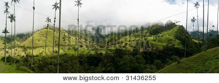 Coffee triangle landscape in Valle de Cocora near Salento in Colombia poster
