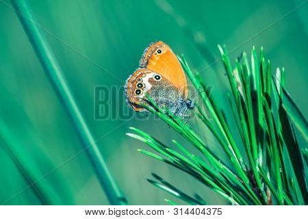 Nature Background Butterfly.butterfly Insect In Nature. Nature Insect Butterfly On Flowers. Butterfl