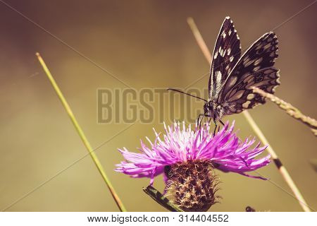 Nature Background Butterfly. Butterfly Insect In Nature. Nature Insect Butterfly On Flowers. Butterf