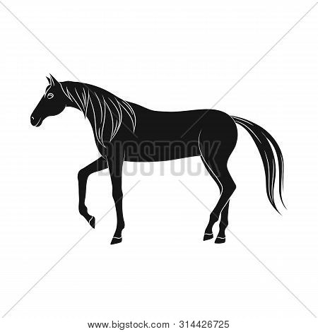 Vector Design Of Horse And Steed Icon. Collection Of Horse And Western Stock Symbol For Web.