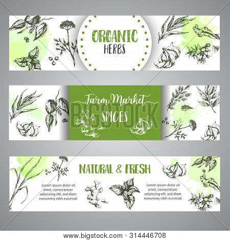 Spices And Herbs Banners Set. Sketch With Hand Drawn Plants. Herbal Vector Illustration Natural Orga