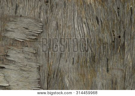 Old Weathered Piece Of Wood With Splinters. Background Texture.