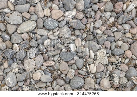 Gray Pebbles On The Sea Beach With Dried Seagrass And Algae Deposits As Background