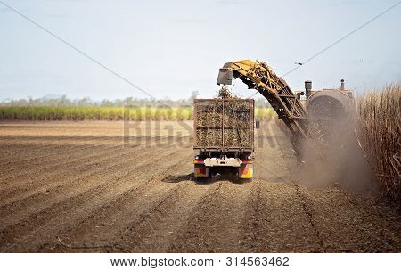 Harvesting Sugar Cane On An Australian Farm And Loading It Chopped Into Bins For Haulage To The Refi