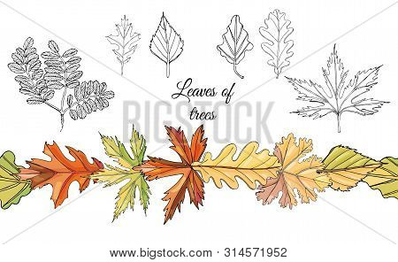 Collection With Monochrome   Leaves Of Different  Trees And Autumn Color Endless Brush Isolated On W