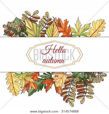 Rectangle Frame With Place For Text  And  Autumn Color  Leaves Of Different  Trees And Flowers  On W