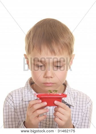 Cute Boy Looking On New Plant. Isolated