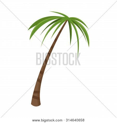 Vector Design Of Palm And Tall Icon. Collection Of Palm And Coco Stock Symbol For Web.