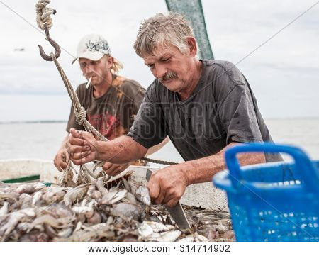 BEAUFORT, SOUTH CAROLINA-SEPTEMBER 14, 2015: Two unidentified fishermen sort a catch of shrimp on the deck of a commercial fishing boat off the coast of South Carolina.