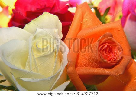 Flowers, Bouquet Of Fresh Roses Of Various Colors ...