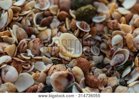 St. Barth's Island (st. Bart's Island), Caribbean Close-up Photo Of A Lot Of Shells On Shell Beach I