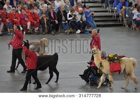 Portland, Or - Jun 8: The 2019 Spirit Mountain Casino Grand Floral Parade At Moda Center In Portland
