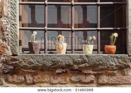 Certaldo (florence), Potted Plants