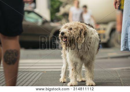 Stray Dog On The Street Lost Stray Dog On Street. Close Up Of Stray Dog. Stray Dog Animal. Stray Dog