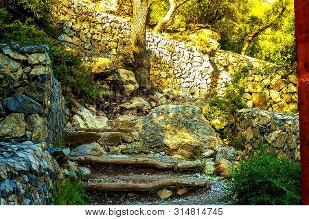 Path In A Dense Forest In The Mountains
